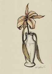 Dried Lily in vase, hand drawing