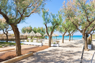 Spiaggia Terme, Apulia - Trees and sunshades at the beach
