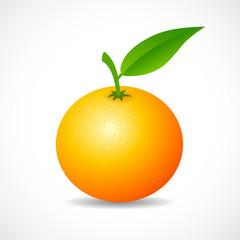 Tangerine vector icon