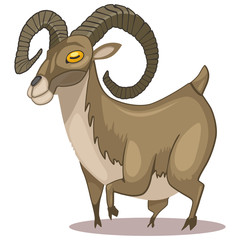 Urial animal cartoon vector illustration isolated on white background.
