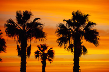 palm trees silhouette against sunrise background
