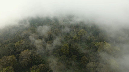 Low lying cloud over evergreen forests. Aerial view of over tropical rainforest mountains with white fog, clouds Jawa island, Indonesia. Fog over the jungle.