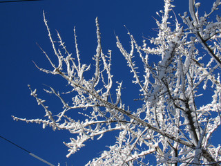 Icy branches in the winter