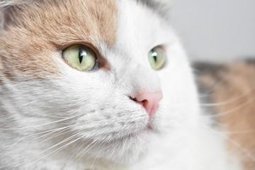 Detail of the cute looking Cat Head