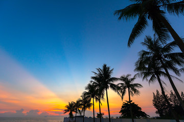 Twilight light after sunset with black silhouette coconut trees.