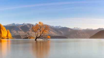 Tree on lake Wanaka which is famous landmark in south island, New Zealand.