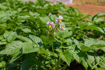 すくすく育つ野菜の苗
