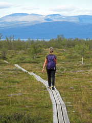 Woman Hiker on the Kungsleden trail, the long distance hiking trail in northern Lapland, Abisko National Park, Sweden, Europe