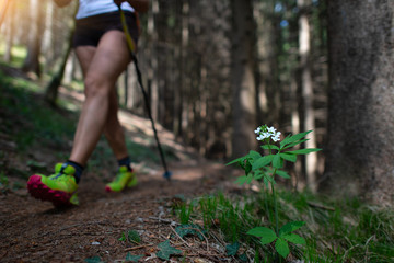 White flower in the woods with passage of a hiker