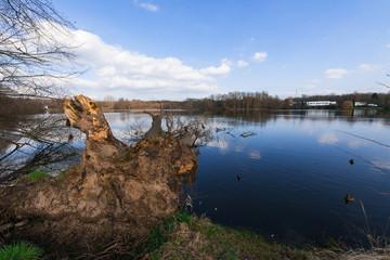 Entwurzelter Baumstamm ragt als Folge eines Sturmschadens in einen See