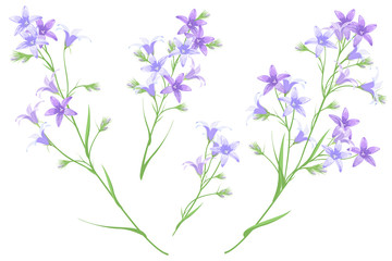 Bellflowers, set of hand drawn vector illustrations, imitation of watercolor painting.
