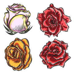 Roses flowers, red pink, yellow and orange head buds. Isolated on white background. Set colle