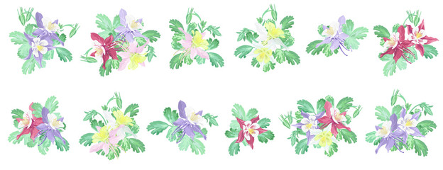 Set of various columbine flowers (Aquilegia) on white background, vector imitation of watercolor painting.