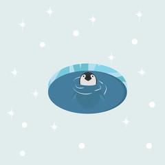 Baby penguin in water