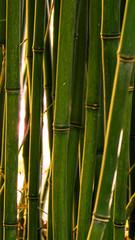 Bambus im Sonnenuntergang