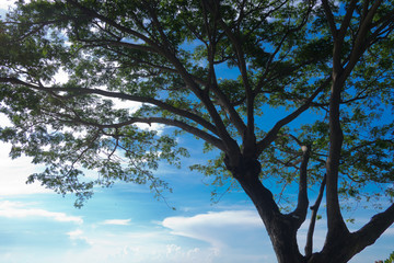 tree on sky, forest, big tree, nature background