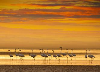 Flamingos at sunset in a lake