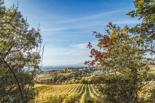 Autumnal view of vineyard in Vienna (Austria)