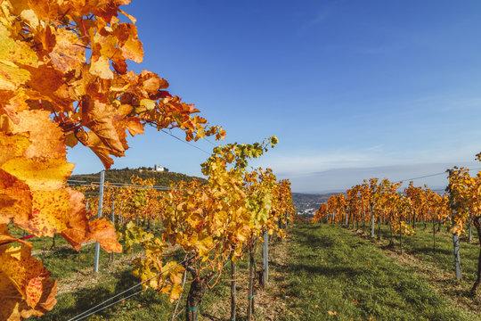 View through vines onto Leopoldsberg