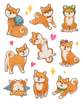 Shiba inu illustrations set. Cute and funny dog in different poses: sitting, standing, lying.  Isolated on white background