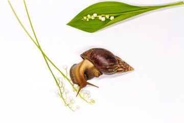 snail on a white background and forest flowers