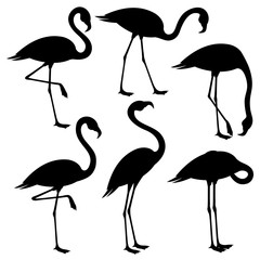 Set of black flamingos on white background.