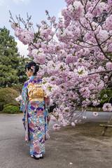 Girl with kimono near a cherry tree in bloom in spring season, Japan