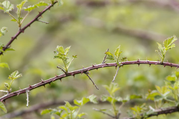 bramble branch with copy space
