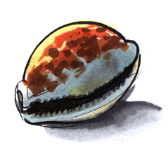 Sea shell cowrie orange, yellow, grey  and brown. Hand-drawn on paper illustration markers. Isolated on white background.