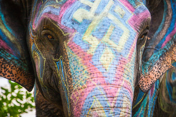 Painted with different colors elephant