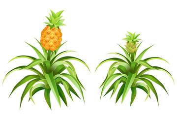 Pineapple tree with fruits. Isolated vector illustration.