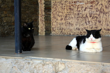 Black cat and black and white cat next.