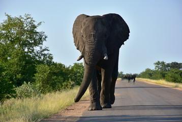 wrong side traffic,left-side driving in Kruger National park in South Africa