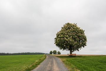Weg zu einer Bank unter einem Kastanienbaum.