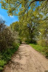 """Baumblüte an einem Wanderweg durch das """"Hohe Holz"""" bei Waren/Müritz"""