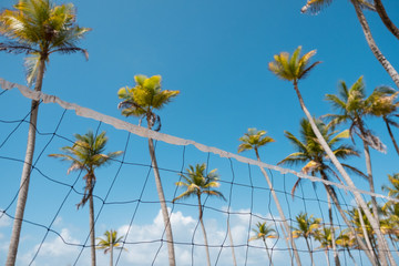 beach volleyball net and palm trees - beach volleyball concept