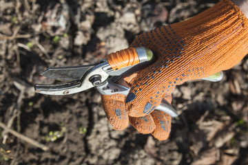 Hand holding the pruning shears