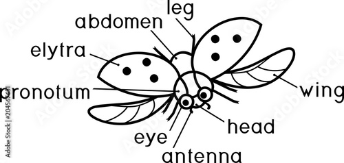 External Structure Of Insect Coloring Page Parts Body Flying Ladybug With Titles