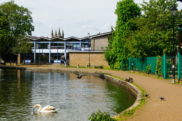 River with swimming swan and flying pigeon. Buildings on background