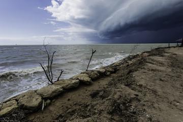 Arbol seco entre las piedras a orillas del mar Mediterráneo