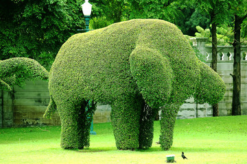 The tree is trimmed to the shape of an elephant.