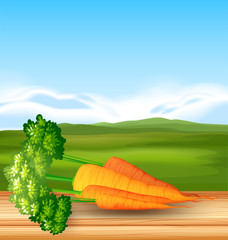Organic Carrots with Beautiful Scenery