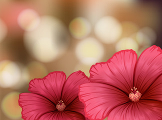 Hibiscus flowers on blur background