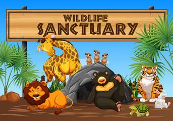 Wildlife Sanctuary Banner and Animals