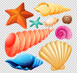 A Set of Seashell for Beach