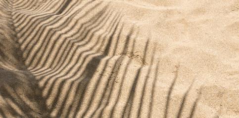 Arrière-plan de vacances, ombre de cocotier sur le sable de la plage