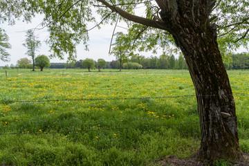Wiosenny krajobraz Podlasia