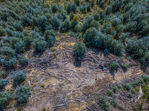 Aerial photography, Deforestation. Aerial photo of environmental damage
