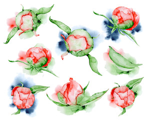 Watercolor red peonies flowers and leaves set Hand drawn illustration
