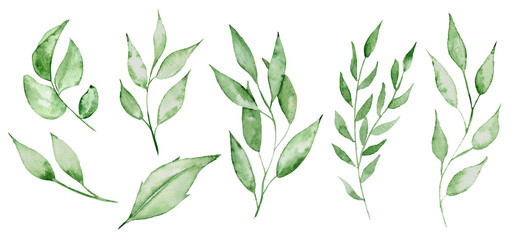 Watercolor green leaves and brunches Greenery herb hand rawn illustration Fotoväggar